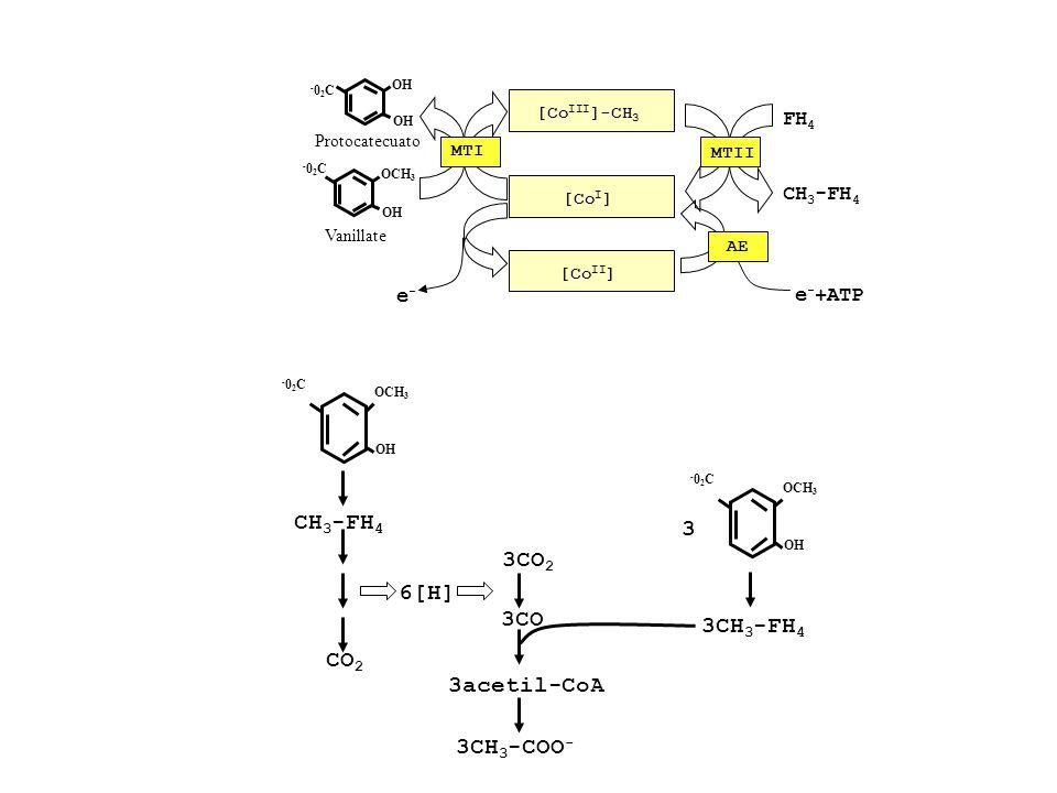CH3-FH4 3 3CO2 6[H] 3CO 3CH3-FH4 CO2 3acetil-CoA 3CH3-COO-